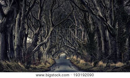 Path through through a dark forest with bizarre trees