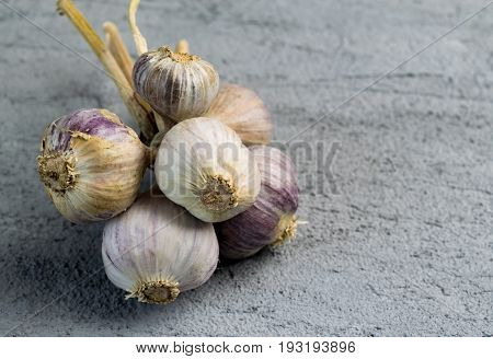 Garlic Bulb Bunch