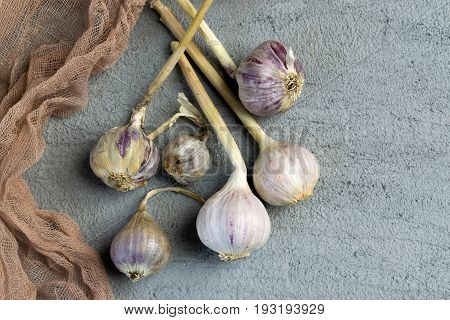 Fresh Garlic Bulbs
