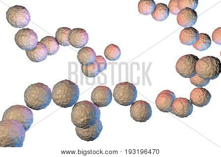 Gram-positive bacteria Streptococcus pyogenes isolated on white background, 3D illustration