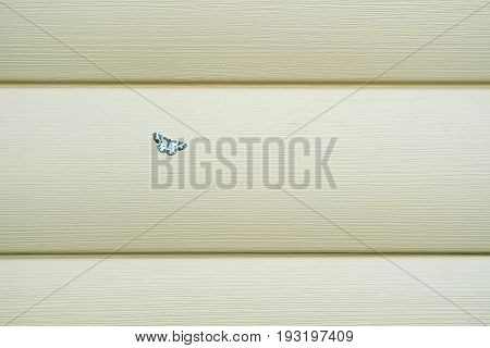 Small beautiful fluffy butterfly sits on wall covered with beige siding panels as background close up horizontal photo front view