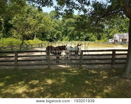 white and brown horse in enclosure with a wood fence