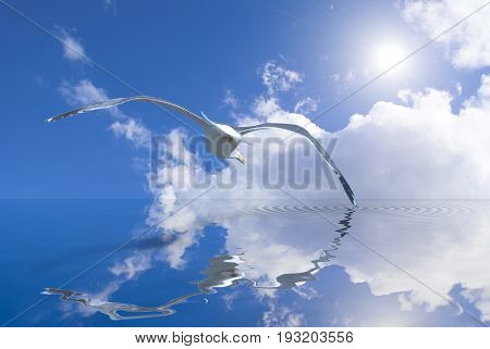 Seagull soaring over the sea just on the surface of the water