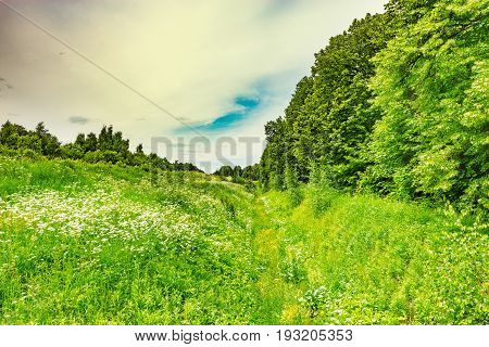Summer view of the green meadow with ditch.