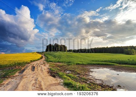 Country Road In Spring Colza Fields