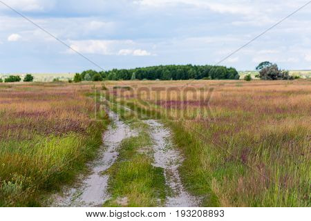 Rural steppe road with beatiful colorful wildflower meadows under cloudy sky.
