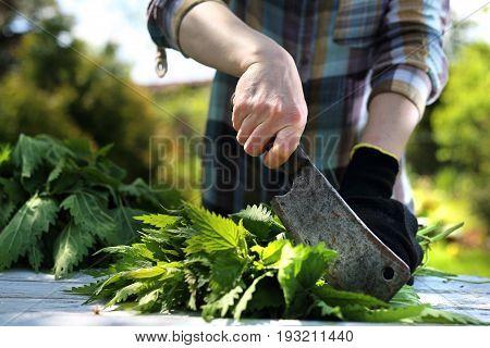 Green nettle herb. Woman chopping nettle leaves.