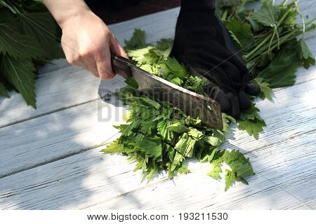 Woman chopping nettle leaves.Herbs nettle, nature straight from the garden.