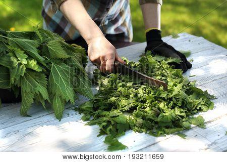 Nettle herb.  Woman chopping green nettle leaves.
