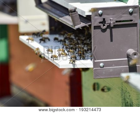 Bees Fly At The Entrance To The Hive. Tray Of The Hive. Hole Entrance To The Hive.
