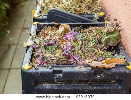 Compost, garbage, green waste in black  bin.