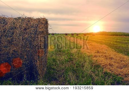 Summer Farm Field with Hay Bales on the Background of Beautiful Sunset. Agriculture Concept. Haystack Scenery. Toned