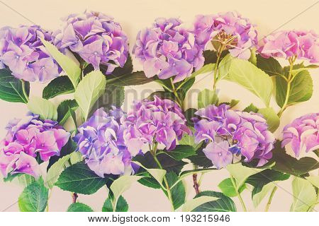blue and violet hortensia flowers pappern on white background, retro toned
