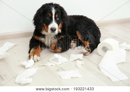Cute funny dog lying on floor with teared up toilet paper