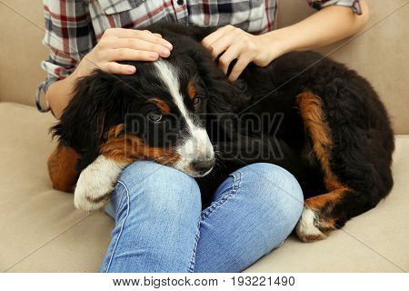 Young woman with cute funny dog on sofa at home, closeup