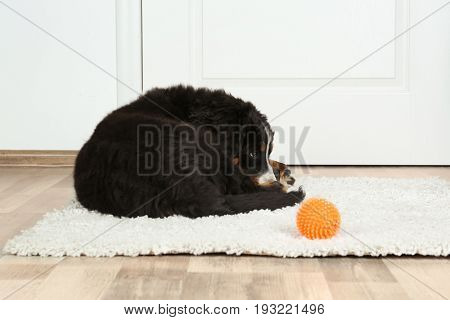 Cute funny dog lying on rug near door at home