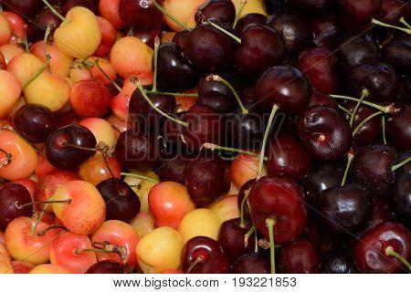 Rainier and bing cherries in bin at farmer's market