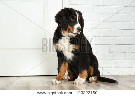 Cute funny dog sitting near door at home
