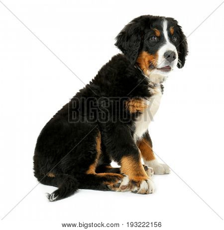 Cute funny dog on white background