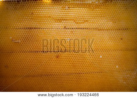 Bee honeycombs of wax in a wooden frame of a beehive full of tasty yellow May honey flower sealed with wax