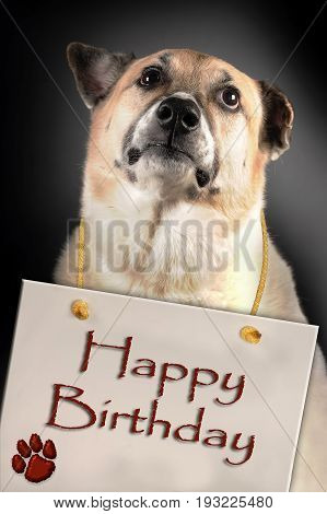Dog with a Happy Birthday sign hanging on neck..