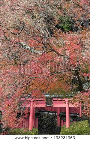 KYOTO JAPAN -NOV 22 2015: Yoshimine-dera temple in autumn. Yoshiminedera is a temple of the Tendai sect of Japanese Buddhism located in Kyoto