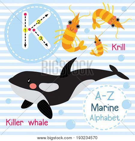 Cute children sea alphabet flashcard of funny marine animal cartoon K letter tracing for kids learning English vocabulary vector illustration.