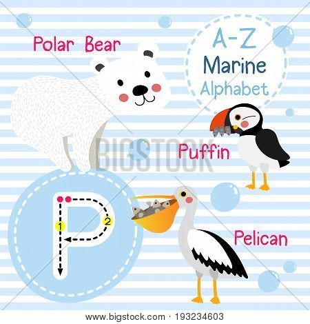 Cute children sea alphabet flashcard of funny marine animal cartoon P letter tracing for kids learning English vocabulary vector illustration.