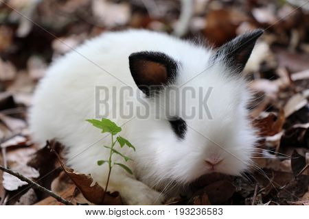 A Baby Lionhead Rabbit Sitting on Brown Leaves by a Twig of Green Leaves