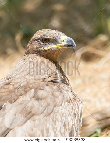 eagle in a park on the nature
