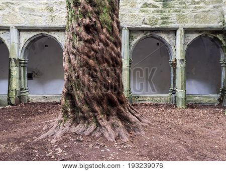 Tree And Cloister In Muckross Abbey