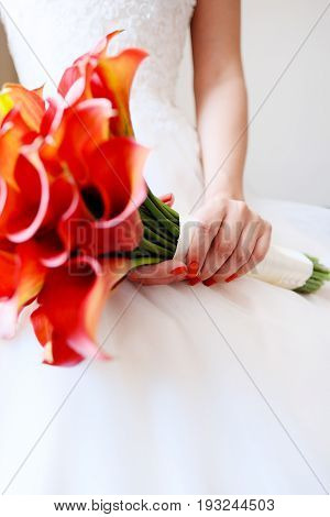 A bouquet of red callas in the hands of the bride