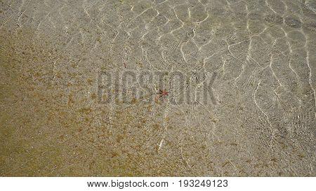 Small Starfish