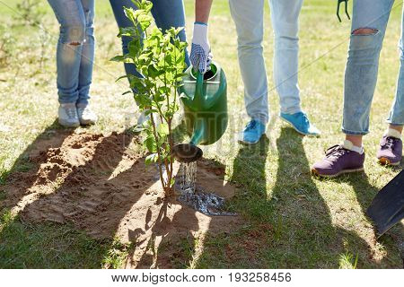 volunteering, charity, people and ecology concept - group of volunteers planting and watering tree with can outdoors
