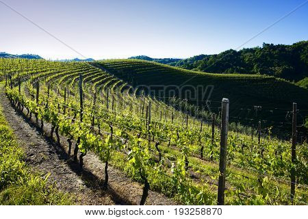 View Of Vineyards And Woods