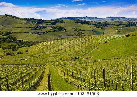 View Of The Langa Vineyards
