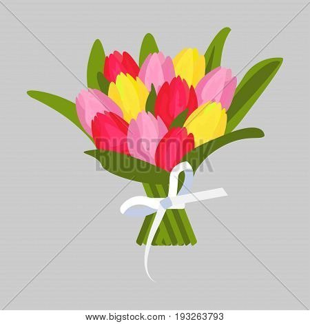 Bouquet of multicolored tulips. Spring flowers with long green leaves decorated white bow. Vector illustration
