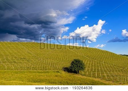View Over The Vineyards And Langa Hills During A Thunderstorm