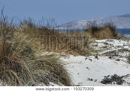 Reeds on dunes by the sea on the island of Kos