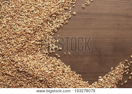 wheat seeds for sprouting. wheat seeds on brown table. top view of wheat seeds sprouting. wheat seeds on wooden background with copy space