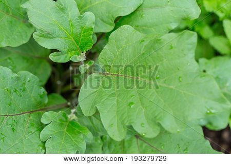 Home Herbal Garden With Label, Nontoxic Clean Plant, Organic Vegetables For Food.