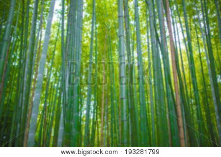 Bamboo forest at Arashiyama forest in Japan Kyoto blur for background.