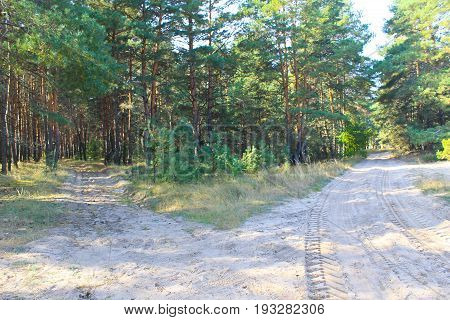 Forked sandy roads in the pine forest