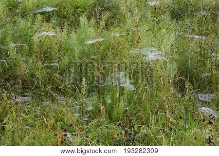Image of an area of scrub land with whisps of spider web coated in morning dew