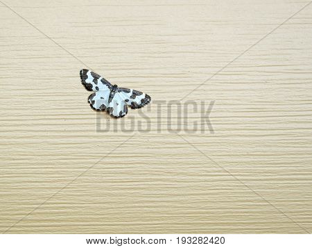 Small beautiful fluffy butterfly sits on beige texture horizontal photo front view close up