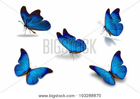 Fifth Blue Butterfly