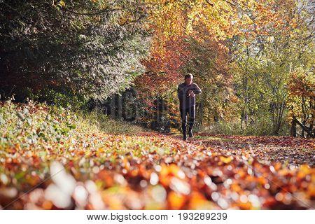 Mature Man On Autumn Run In Woods Checks Activity Tracker