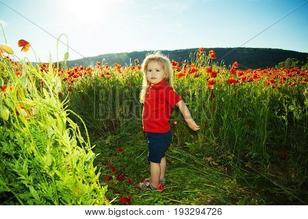 Small Boy Or Child In Field Of Poppy Seed