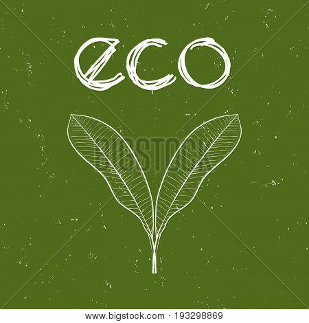 Eco badge with leaves for organic, natural, bio and eco friendly products on green shabby background.