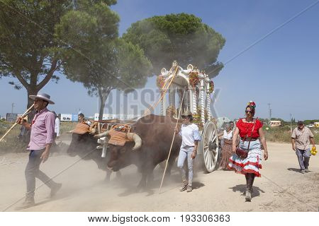 El Rocio Spain - June 2 2017: Pilgrims with a bull-drawn carriage on the road to El Rocio during the pilgrimage Romeria 2017. Province of Huelva Andalusia Spain